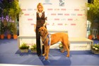 Asuka - World Dog Show 2011