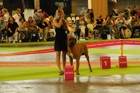 Chinzei - World Dog Show 2011